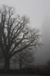 eiche-nebel